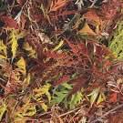 RCork Digital PHOTOCORK Ambition PB-CP Autumn Brake клеевое