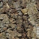 Granorte PB-W Мато (Mato) настенное клеевое